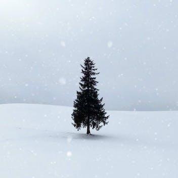 Un Noël qui fait sens